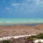 Seaweed at the shore.