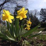 Spring in Pennsylvania