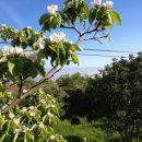 Walking Colonia de Sant Pere to Arta to Cala Rajada