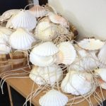Scallop Shells in the Pilgrim's Office