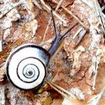 Spanish snails are beautiful!