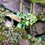 Rock wall plants.