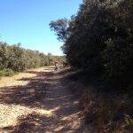 Rocky paths.