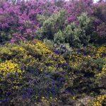 Camino wildflowers