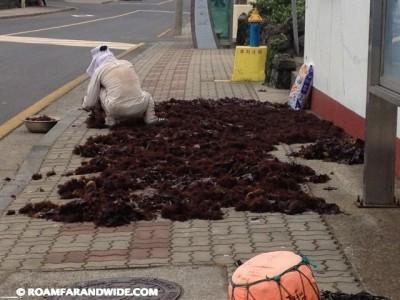 Seaweed drying on the sidewalk.