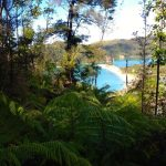 Walk in Abel Tasman