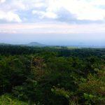 Jeju Island foliage.