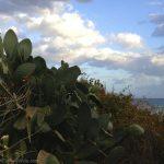 Cactus in Agia Roumeli