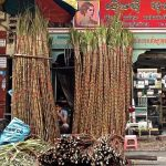 """Sugarcane Street"" in Phnom Penh"