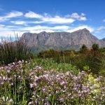 Wine tasting route in South Africa