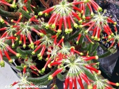 Kirstenbosch Gardens