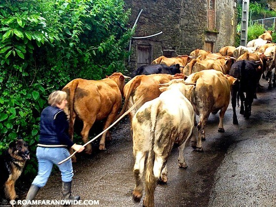 Traffic Jam on the Camino de Santiago