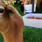 Curious lamb.