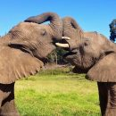 Photo of the Week: Elephants in Knysna Elephant Park, South Africa