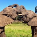 Elephant Encounters in Knysna Elephant Park, South Africa