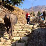 Ulleri to Ghorepani trek.