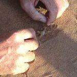 A spiderweb under the sand.