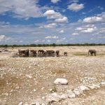 Elephants at watering hole.