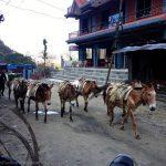 Nayapul, Nepal