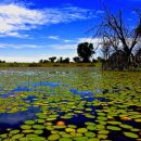 Photo of the Week: Okavango Delta, Botswana