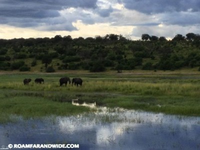 Elephants in Chobe River,