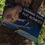 Swimming pool for monkeys!