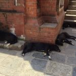 Sleeping dogs everywhere!