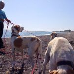 Santorini Animal Welfare Association