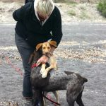Santorini Animal Welfare Association