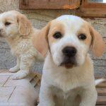 SAWA- Helping animals in Santorini
