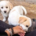 SAWA - SAWA- Helping animals in Santorini