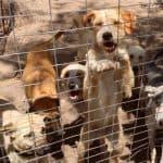 Help the animals in Santorini