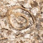 Spiral at ancient Palace of Phaistos