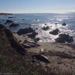 Elephant Seals near San Simeon, CA