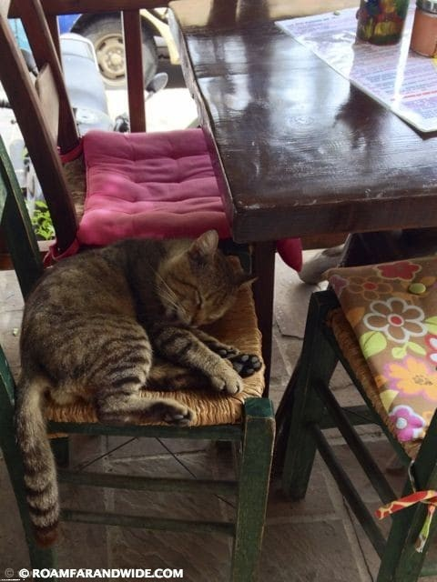 Cats are everywhere in Chania's Old Town