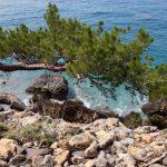 Pines hang from vertical cliffs