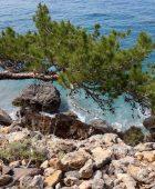 Pine and Cretan Coast