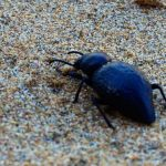Beetle in the sand.
