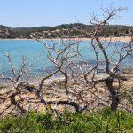 Dead trees near Sarenenko Beach
