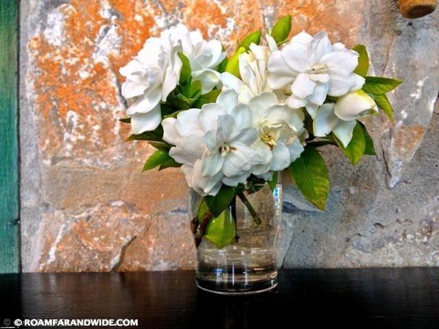 Fresh magnolias