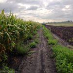 Trail across muddy field