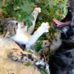 Kitten and dog play.