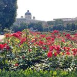 Rose Garden in Vienna