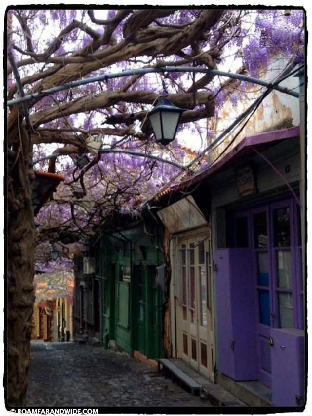 Wisteria in Molivos, Greece