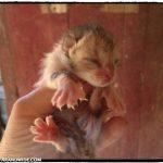New kittens in barns.