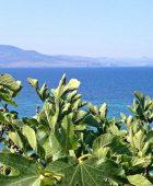 Lesvos Island, Greece