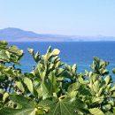 Snapshots from Lesvos Island, Greece
