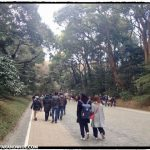 Walk to Meiji Jingu Shrine