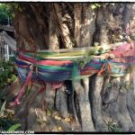 Thais believe some spirits live in trees (similar to elves) andthey adorn these special trees with colorful fabric.