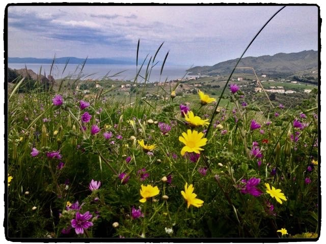 Wildflowers in Molyvos